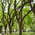 Ba_san_martin_park_trees