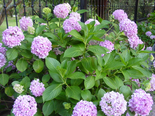 Ba_el_tigre_flowers