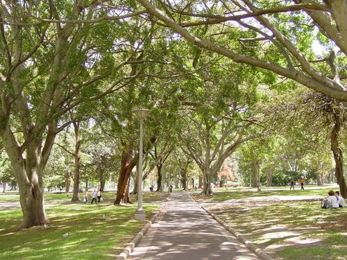 Sydney_hyde_park_trees
