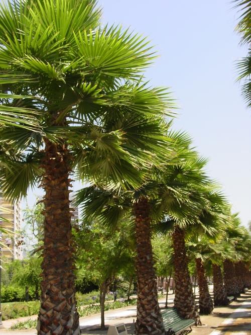 Santiago_park_trees