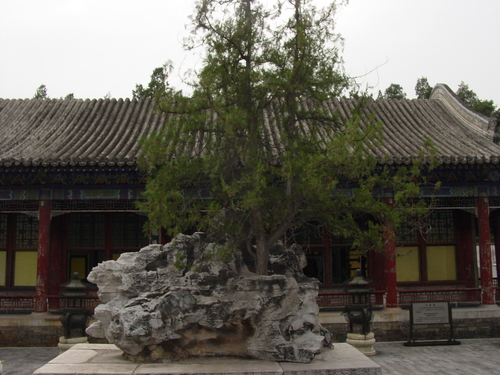 Beijing_new_summer_palace_rock_tree