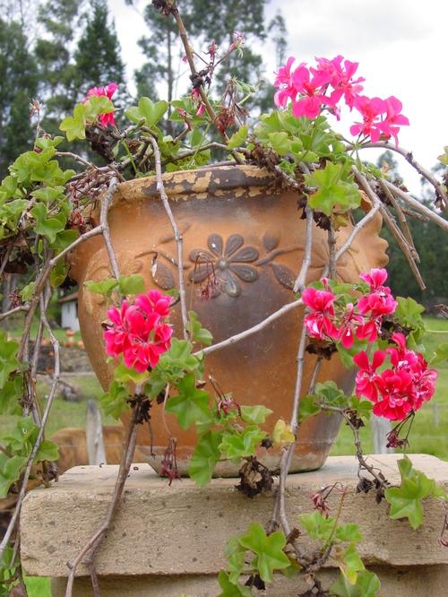 Candelaria_monestary_flowers
