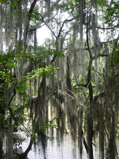San_gil_bearded_trees_iii