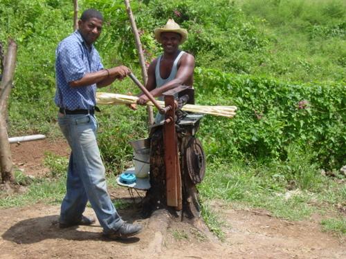 trinidad_grinding_sugar_cane