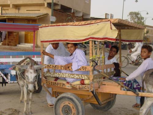 Siwa_boys_with_donkey_carts