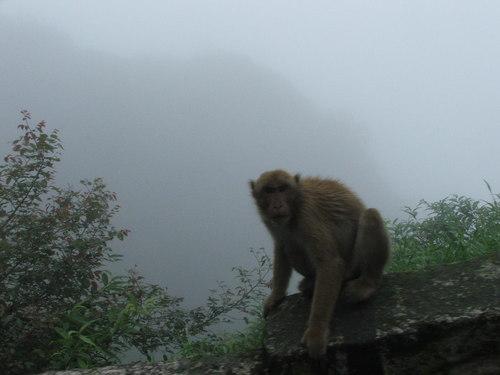 Darjeeling_moneys_in_the_mist_ii