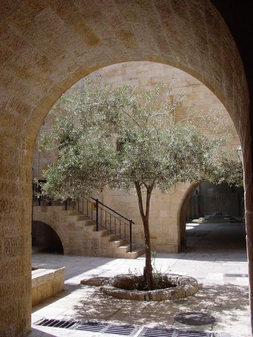 Jerusalem_old_city_jewish_quarter_tree