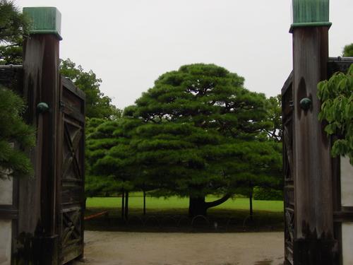 Kyoto_nijojo_castle_iv