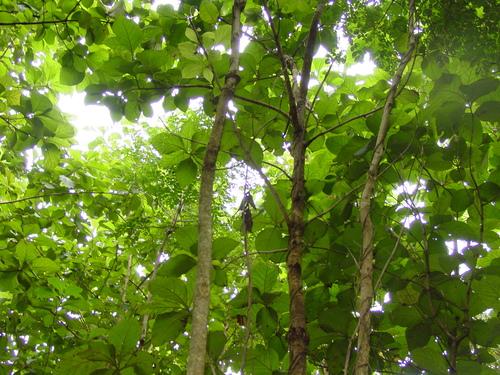 Vang_vieng_vegetation