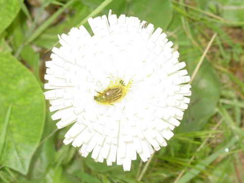 Volubis_pretty_flower