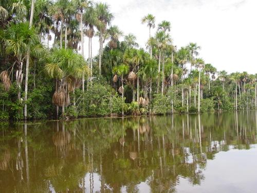 reserva_amazonica_lake_sandoval_trees_ii_1