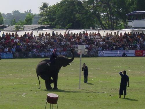 Surin_elephant_festival_elephant_basketb