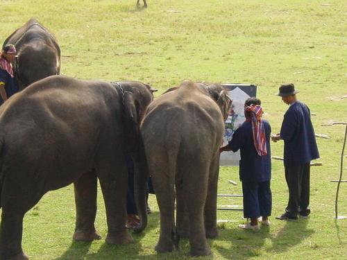 Surin_elephant_festival_elephant_paintin_3