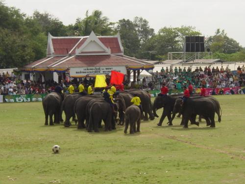 Surin_elephant_festival_elephant_soccer_