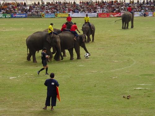 Surin_elephant_festival_elephant_soccer__1