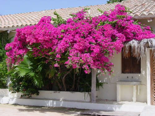 Los_roques_flowers