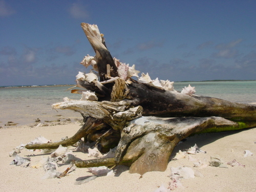 Los_roques_sand_bar_shell_tree_i