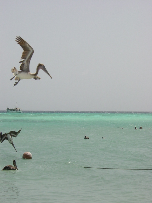 los_roques_water_iii